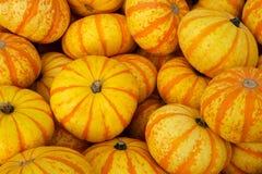 Оранжевые и желтые тыквы Стоковое фото RF