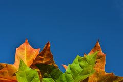Оранжевые и зеленые кленовые листы осени против голубого неба стоковая фотография
