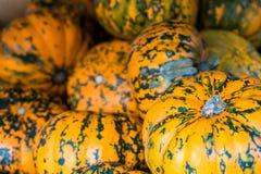 Оранжевые и зеленые тыквы Стоковые Изображения