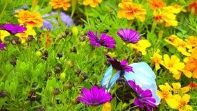 Оранжевые и фиолетовые цветки сток-видео