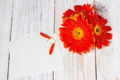 Оранжевые красочные цветки gerbera Стоковая Фотография RF