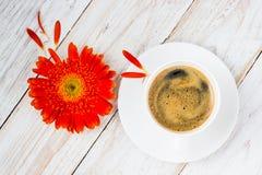 Оранжевые красочные цветки gerbera Стоковые Фотографии RF