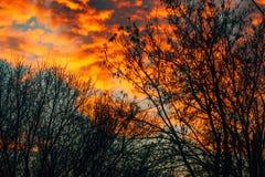 Оранжевые облака в заходе солнца зимы через чуть-чуть ветви дерева Стоковая Фотография RF