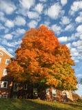 Оранжевые осенние дерево и облака в середине ноября стоковое фото rf
