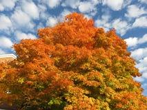 Оранжевые осенние дерево и облака стоковая фотография rf