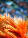Оранжевые парики Стоковые Фотографии RF