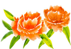 Оранжевые пионы Стоковое Фото