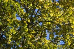 Оранжевые поддельные лист Стоковое Изображение