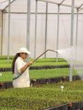 Оранжевые семена в питомнике Стоковое Фото