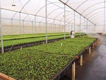 Оранжевые семена в питомнике Стоковые Изображения RF