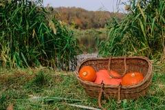оранжевые тыквы в плетеной деревянной корзине на речном береге halloween стоковое фото