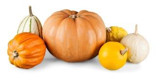 Оранжевые тыквы изолированные на белой предпосылке Стоковые Фотографии RF