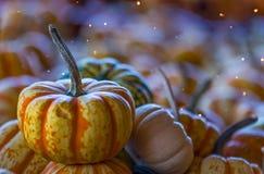 Оранжевые тыквы сбора Stipped стоковое изображение rf