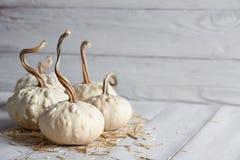 Оранжевые тыквы хеллоуина на белых планках Стоковые Фото
