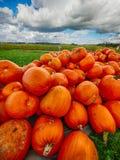 Оранжевые тыквы Helloween outdoors Стоковые Изображения RF