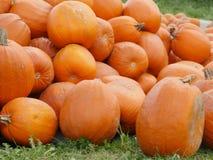 Оранжевые тыквы Helloween outdoors Стоковые Изображения