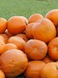 Оранжевые тыквы Helloween outdoors Стоковое фото RF