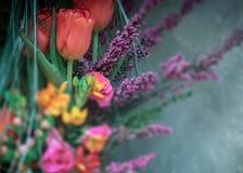 Оранжевые тюльпаны в фокусе, все другие цветки из фокуса стоковая фотография rf