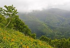 Оранжевые цветки в горах Стоковые Изображения