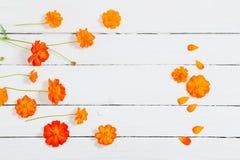 Оранжевые цветки лета на деревянном backgrond Стоковые Изображения RF