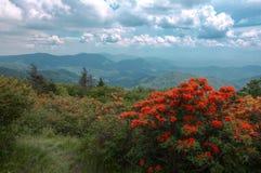 Оранжевые цветки и горы стоковые фотографии rf