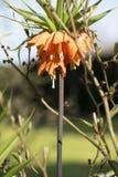 Оранжевые цветки на лужайке Стоковое Изображение