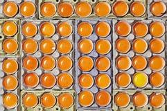 Оранжевые яичка желтка и уникально одно яичко желтого желтка Стоковые Изображения RF