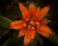 Оранжевые Fairy мечты Стоковое Фото