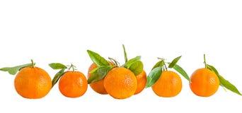 Оранжевые tangerines на белой предпосылке Стоковая Фотография