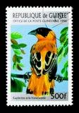 Оранжевый епископ (franciscana) orix Euplectes, serie птиц, около 1 Стоковое фото RF