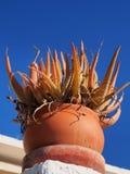 Оранжевый завод кактуса Стоковая Фотография RF