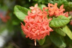 Оранжевый зеленый цвет цветка выходит заводы Стоковые Фотографии RF