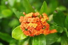 Оранжевый зеленый цвет цветка выходит заводы Стоковые Изображения RF
