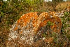 Оранжевый лишайник Стоковые Изображения