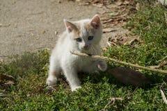 Оранжевый и белый играть котенка Стоковые Фотографии RF