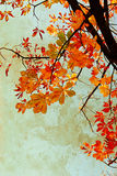 Оранжевый каштан выходит grungy предпосылка Стоковое Изображение