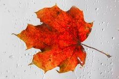 Оранжевый кленовый лист осени на ненастном окне Концепция сезонов падения Стоковые Фотографии RF