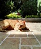 Оранжевый кот в цветочном саде стоковая фотография rf
