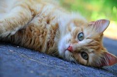 Оранжевый кот лежа вниз был ленивый Стоковые Фотографии RF