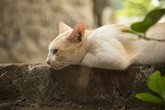 Оранжевый кот кладя на стену Стоковые Фото