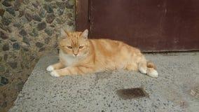 Оранжевый кот около двери Стоковое фото RF