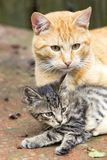 Оранжевый кот с котенком Стоковое фото RF