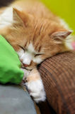 Оранжевый кот уснувший Стоковое фото RF