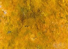 Оранжевый крупный план лишайника Стоковая Фотография RF