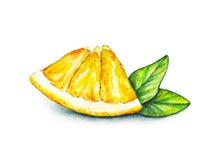 Оранжевый кусок плодоовощ с зелеными листьями Ручная работа плодоовощ тропический еда здоровая акварель Стоковое Фото