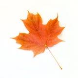Оранжевый кленовый лист изолированный на белизне Стоковое фото RF
