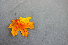 Оранжевый кленовый лист на серой ткани Стоковое Фото