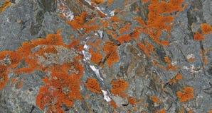 Оранжевый лишайник покрывает утесы Стоковое Изображение