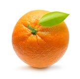 Оранжевый плодоовощ Стоковое фото RF