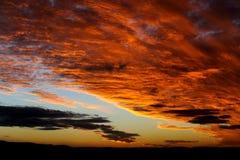 Оранжевый рай стоковое изображение rf